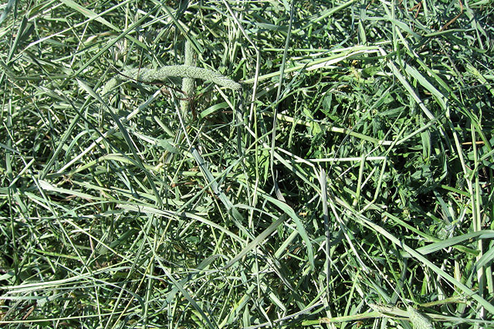 Mixed Hay For Horses Barr Ag Hay Amp Grain Exporters Blog